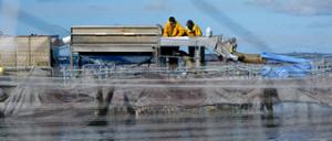 La pêche - équipe de la société Saumon de France
