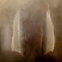 Le fumage à la ficelle du saumon fume