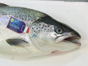 Reconnaitre un saumon de france - Tête de saumon de France