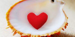 noix de saint jacques pour la saint valentin