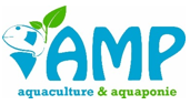 logo_amp2